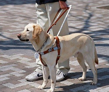 Us Service Animals Emotional Support Service Animal Registration